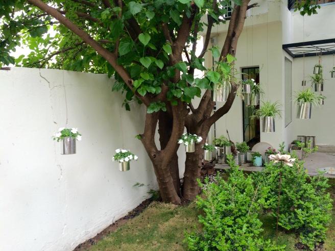 Plantas colgantes Divo