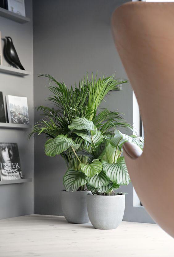 decoracion-con-areca-y-planta-verde