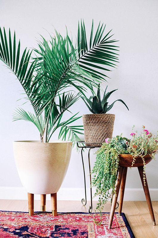 decoracion-palmera